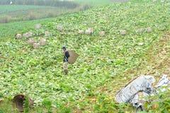Farm Worker Royalty Free Stock Photo