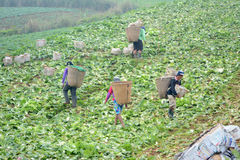 Farm Worker Stock Image