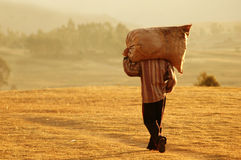Farm Worker in Peru royalty free stock photo
