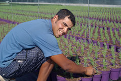 Farm worker preparing new plants Stock Photos
