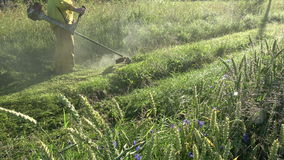 Worker in morning mowing dewy grass from road with lawn mower trimmer. Farm worker in summer morning mowing dewy grass from  road with lawn mower trimmer stock footage