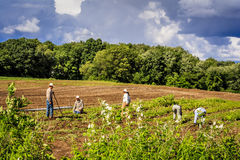 Farm workers in the fields. Just before the storm moves in Stock Photo