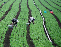 Farm workers in a green field Stock Photos
