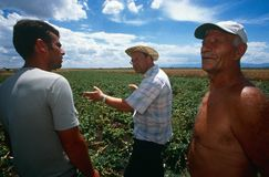 Farm workers in Kosovo. Royalty Free Stock Photography