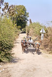 Bullock cart dirt track farm produce. Farm workers riding on a bullock cart transporting their produce along a dirt track lined with bushes and trees to the Royalty Free Stock Photos