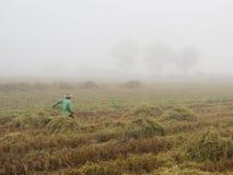 Farm working Stock Photos
