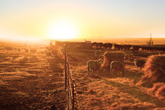 Farm yard Royalty Free Stock Image