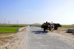 Farm. You would like to see the beauty of the fields and tree plants in the village of India Stock Photography