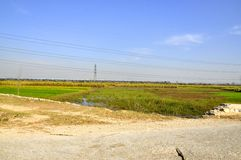 Farm. You would like to see the beauty of the fields and tree plants in the village of India Stock Images