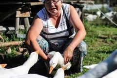 Farma drobiu - kobiety żywieniowe gąski Obraz Royalty Free