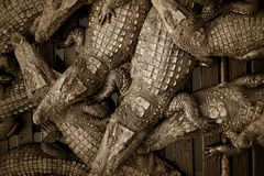farma krokodyli Obraz Royalty Free