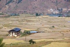 Farmaland a terrazze, Paro, Bhutan Fotografia Stock Libera da Diritti