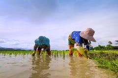 Farme all'aperto alla Tailandia Fotografie Stock Libere da Diritti