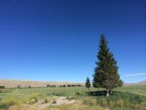 Farmed field with evergreen tree Royalty Free Stock Image