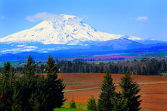Farmed land under Mt Adams. A view of plowed farmland in beautiful eastern Washington state. Snow capped Mt Adams in the distance. Clear blue skies stock image