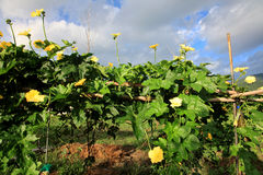 Farmer's-Garten Lizenzfreie Stockfotografie