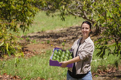 Farmer με τα αβοκάντο στοκ εικόνα