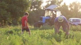 Farmer με τα παιδιά που συγκομίζουν την οργανική συγκομιδή καρότων στον τομέα του αγροκτήματος eco απόθεμα βίντεο