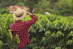 Farmer με το καπέλο που φαίνεται ο τομέας φυτειών καφέ Στοκ εικόνα με δικαίωμα ελεύθερης χρήσης