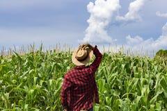 Farmer με το καπέλο που φαίνεται ο τομέας φυτειών καλαμποκιού Στοκ φωτογραφίες με δικαίωμα ελεύθερης χρήσης