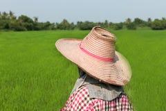 Farmer που λειτουργεί στον πράσινο τομέα ρυζιού Στοκ Εικόνες