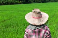 Farmer που λειτουργεί στον πράσινο τομέα ρυζιού Στοκ φωτογραφίες με δικαίωμα ελεύθερης χρήσης