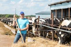 Farmer που λειτουργεί στο αγρόκτημα με τις γαλακτοκομικές αγελάδες Στοκ Φωτογραφίες