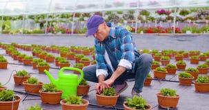 Farmer που εξετάζει τις εγκαταστάσεις στο αγρόκτημα φιλμ μικρού μήκους