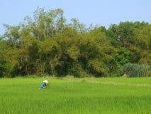 Farmer που λειτουργεί σε έναν μεγάλο πράσινο τομέα ρυζιού στην Ασία Στοκ Φωτογραφία