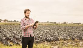 Farmer που λειτουργεί στη χρησιμοποίηση της ταμπλέτας μπροστά από τον τομέα λάχανων Στοκ φωτογραφία με δικαίωμα ελεύθερης χρήσης
