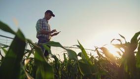 Farmer που λειτουργεί cornfield, που χρησιμοποιεί το smartphone απόθεμα βίντεο