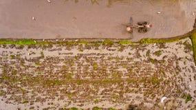 Farmer που οργώνει έναν ορυζώνα ρυζιού Στοκ Φωτογραφία