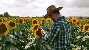 Farmer που παίρνει τις εικόνες με το smartphone στη φυτεία ηλίανθων απόθεμα βίντεο