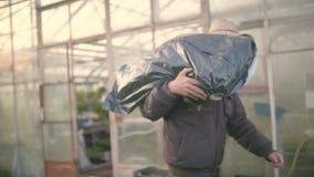 Farmer που παίρνει το δίσκο σποροφύτων στο θερμοκήπιο απόθεμα βίντεο