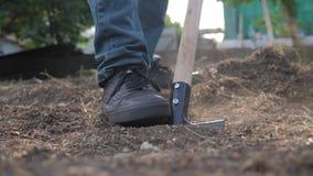 Farmer που σκάβει το έδαφος με μια κινηματογράφηση σε πρώτο πλάνο κήπων φτυαριών r αγρότης ατόμων που εργάζεται στη γεωργία κήπων απόθεμα βίντεο