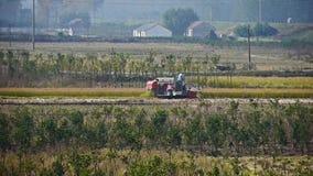 Farmer που συγκομίζει το σίτο με μια θεριστική μηχανή στον τομέα φιλμ μικρού μήκους