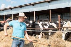 Farmer που ταΐζει τις αγελάδες στο αγρόκτημα Στοκ Φωτογραφίες