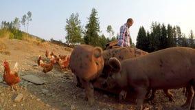 Farmer που ταΐζει τους χοίρους και την κότα στο αγρόκτημα 4k απόθεμα βίντεο