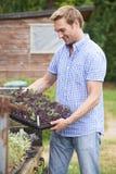 Farmer που φυτεύει τα σπορόφυτα στο οργανικό αγρόκτημα Στοκ Εικόνες