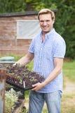 Farmer που φυτεύει τα σπορόφυτα στο οργανικό αγρόκτημα Στοκ Εικόνα
