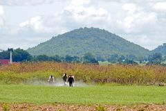 Farmer που ψεκάζει το φυτοφάρμακο στον τομέα ορυζώνα στοκ φωτογραφία με δικαίωμα ελεύθερης χρήσης