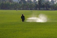 Farmer που ψεκάζει το φυτοφάρμακο στον τομέα ορυζώνα στοκ εικόνες με δικαίωμα ελεύθερης χρήσης