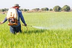 Farmer που ψεκάζει το φυτοφάρμακο στον τομέα ρυζιού στοκ φωτογραφία με δικαίωμα ελεύθερης χρήσης