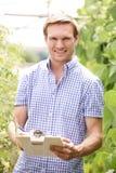Farmer στο θερμοκήπιο που ελέγχει τις τοματιές Στοκ Εικόνα