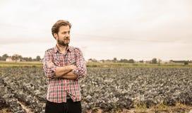 Farmer στο πουκάμισο καρό και τον τομέα λάχανων - γεωργία Στοκ εικόνες με δικαίωμα ελεύθερης χρήσης