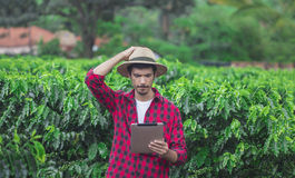 Farmer χρησιμοποιώντας τον ψηφιακό υπολογιστή ταμπλετών στην καλλιεργημένη φυτεία τομέων καφέ Στοκ Εικόνες
