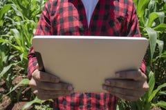 Farmer χρησιμοποιώντας τον ψηφιακό υπολογιστή ταμπλετών στην καλλιεργημένη φυτεία τομέων καλαμποκιού Στοκ εικόνα με δικαίωμα ελεύθερης χρήσης