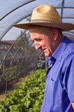 Farmer. Looking at the plants Royalty Free Stock Images