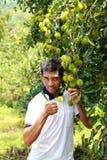 Farmer. Showing high quality plants Stock Photos