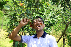 Farmer. Eating fruit from the tree Stock Image